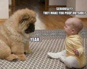 Funny-Dog-Pics-19