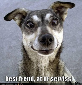 lol-dogs-funny-dog-picture-service