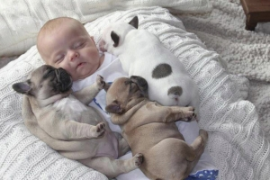 635848417907365810-23136009_Baby-Sleeping-with-French-Bulldog-2
