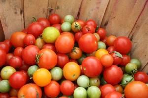 ramon-gonzalez-tomatoes-jpg-650x0_q70_crop-smart