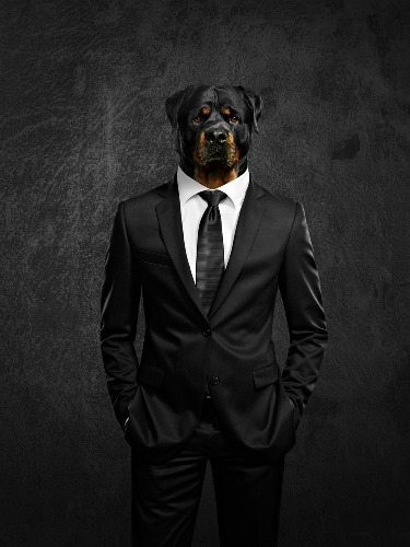 dog-in-suit-image-3