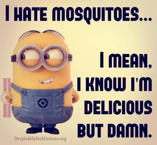 funny-minion-quotes-i-hate-mosquitoes