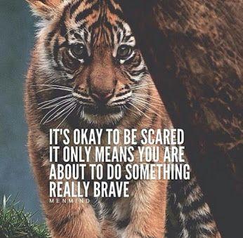 ab15bfc7ac6c74875393c55d8a079e96--tiger-quotes-lion-quotes