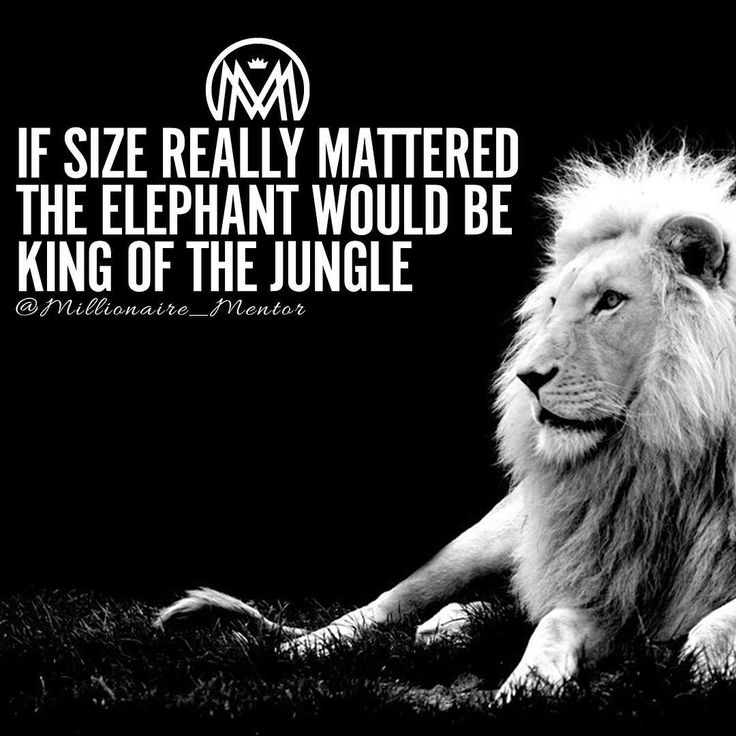 be6470b0de47c81e274e4560ad103896--quotes-about-lions-tattoo-quotes-about-strength