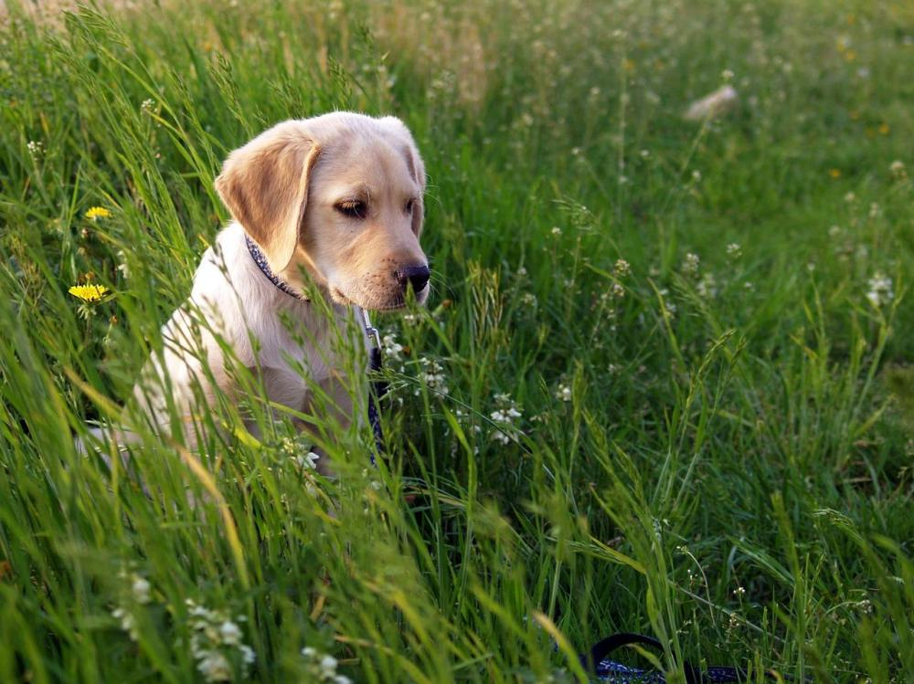 dog_in_grass_-_localpups